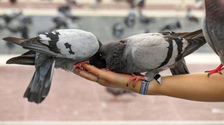 Dlaczego ptaki wlatują na nasze balkony?